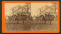 Cracker wagon. (Man riding mule pulling cart with woman in it), by Havens, O. Pierre, 1838-1912.png