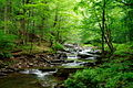 Creek-Trail-Seneca ForestWander.JPG