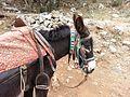 Cretan donkey with adornments.jpg