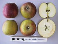 Cross section of Christmas Pearmain, National Fruit Collection (acc. 2000-026).jpg