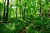 Cudahy Woods.jpg