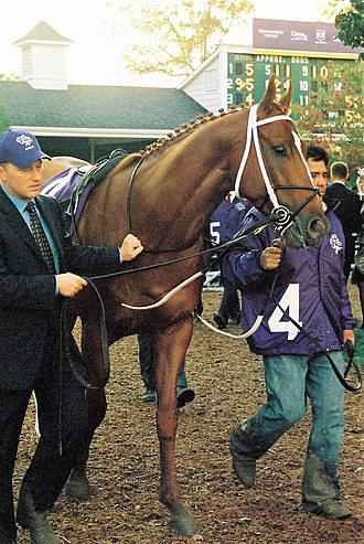 2007 Breeders' Cup Classic - Curlin at the 2007 Breeders' Cup