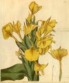 Curtis's Botanical Magazine, Plate 3039 (Volume 58, 1831).png