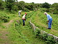 Cutting bracken in Drake's Plymouth Leat.JPG