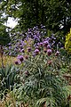 Cynara cardunculus, Easton Lodge Gardens, Little Easton, Essex, England 2.jpg