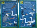 D-BW - Eriskircher Ried - Übersichtstafel 'Vögel'.png