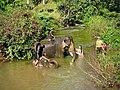 DKoehl Airavata elephants Miss Cambodia Saritha Reth and Miss Somanika Suon Pierre-Yves Clais2 2020 12 13.jpg