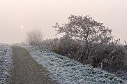 De zon probeert door de mist te breken. Locatie, Langweerderwielen (Langwarder Wielen) en omgeving 01.jpg