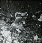 DeadJapaneseJan43
