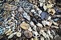 Dead organisms in Benin.jpg