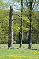 Death and live at Hoge erf Schaarsbergen with nice spring colours - panoramio.jpg