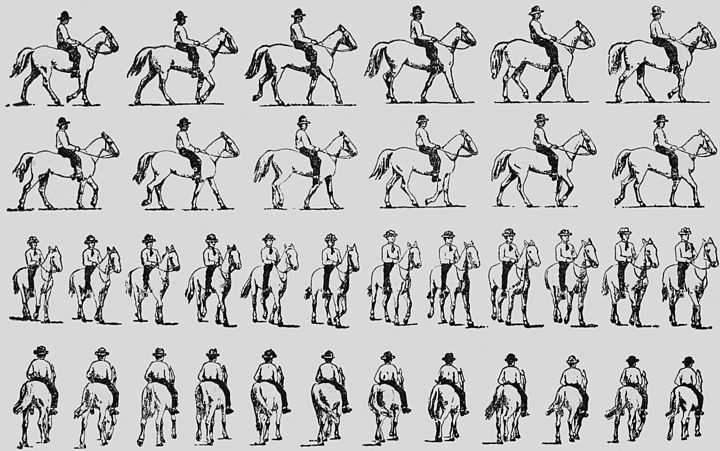 "REDUCED OUTLINE TRACING OF PLATE 579.—""ANIMAL LOCOMOTION."""