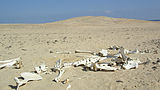 Desert-skelleton-red-sea.jpg