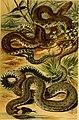 Deutschlands Amphibien und Reptilien (1890) (20267480643).jpg