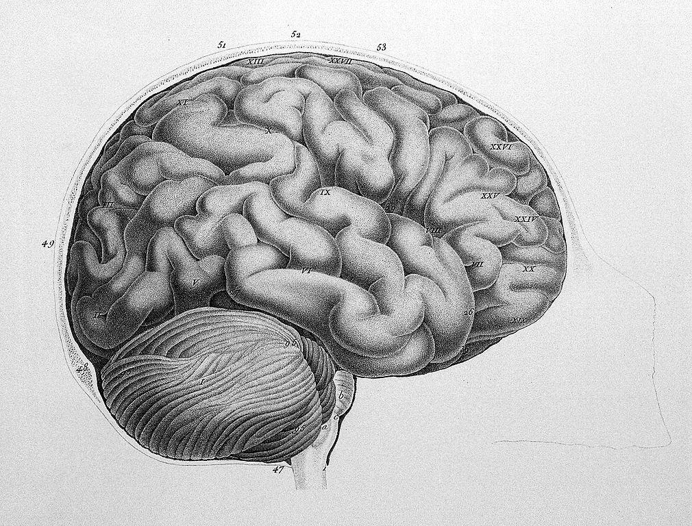 Filediagram Of The Brain Wellcome L0008294g Wikimedia Commons