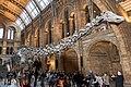 Diploducus dinsosaur London (31519789423).jpg