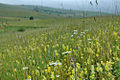 Discovering Pester Plateau in Serbia 3102 13.jpg