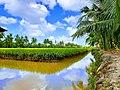 Donglua KHai.jpg