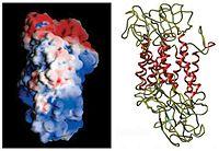 Dopamine Transporter.jpg