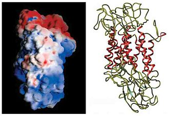 Monoamine transporter - Dopamine Transporter (DAT-6)