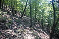 Douthat State Park - Mountain Side Trail.jpg