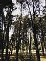 Drveće u parku Svetog Save u Nišu (8).jpg