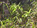 Dscn0069 japan nature.jpg