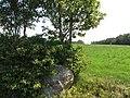 Dubingių sen., Lithuania - panoramio (9).jpg