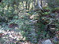 Dun Mountain Trail 13.JPG