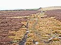 Edmondbyers Common - geograph.org.uk - 157142.jpg