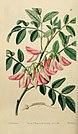 Edwards' botanical register, or, Ornamental flower-garden and shrubbery .. (1829-1847) (20552007524).jpg
