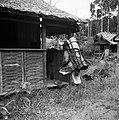 Een zogenaamde Balata-bleeder bij een huis in Nickerie, Bestanddeelnr 252-5428.jpg