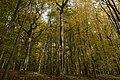 Eichen-Hainbuchenwald im Naturwaldreservat Schwengbrunn - Lkr Coburg - Bayern.jpg