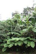 El Yunque nat park PR IMG 2152.jpg
