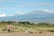 Elephant and Kilimanjaro.jpg