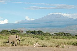 An elephant passing by Mt. Kilimanjaro