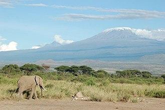 Kilimanjaro Region - An elephant passing by the north side of Mount Kilimanjaro, in Kenya