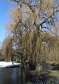 Englischer Garten Winter Muenchen-9.jpg