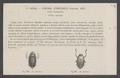 Enhydrus - Print - Iconographia Zoologica - Special Collections University of Amsterdam - UBAINV0274 014 06 0003.tif