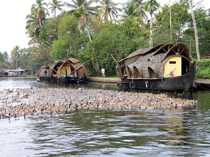படிமம்:Enten backwaters.JPG