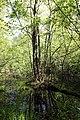 Erlenbruch Langwiesenholz 11.jpg