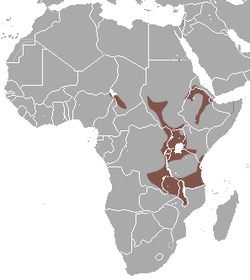 Ethiopian Epauletted Fruit Bat area.png