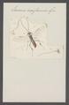 Euceros - Print - Iconographia Zoologica - Special Collections University of Amsterdam - UBAINV0274 046 03 0045.tif
