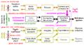 Evolution des circuits neurobiologiques de la motivation sexuelle chez les mammifères.png