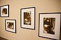 Exposições no Museu de Arte Contemporânea de Niterói (37196332984).jpg