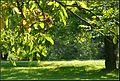 Fények - panoramio (2).jpg
