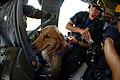 FEMA - 15239 - Photograph by Jocelyn Augustino taken on 09-09-2005 in Louisiana.jpg