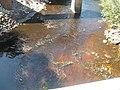 FL Jennings CR 150 Alapaha River south02.jpg