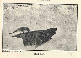 Hooded seal - Image: FMIB 34394 Hood Seals