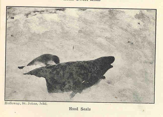 FMIB 34394 Hood Seals.jpeg